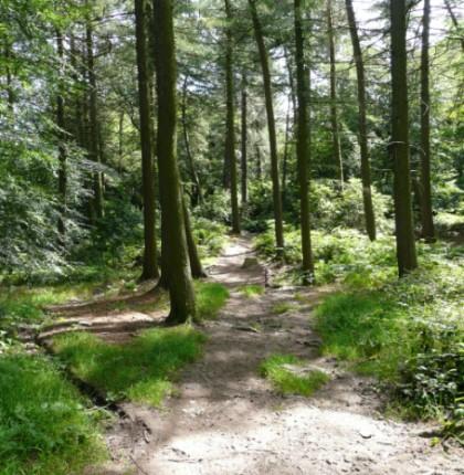 Upper Dearne Woods