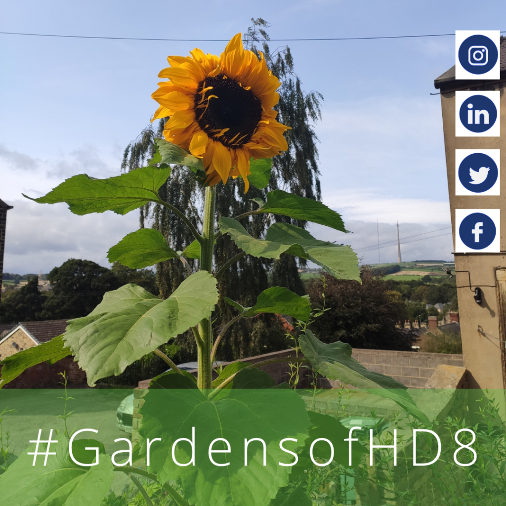 Gardens of HD8 #GardensofHD8